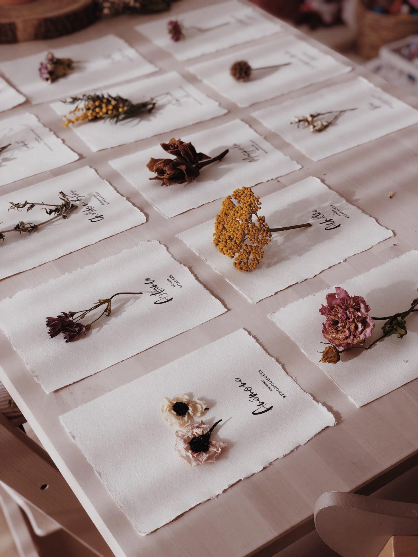 Souvenirs herbier fleurs séchées